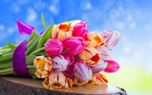 tulips_flowers_bouquet_85636_1680x1050.jpg