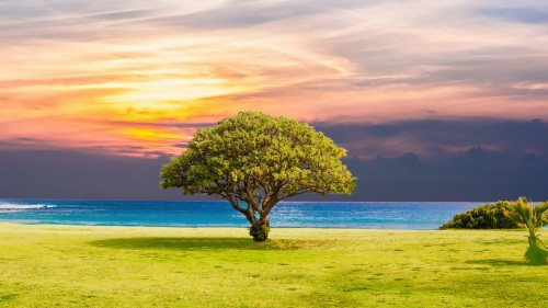 tree_grass_beach_ocean_landscape_5k-5120x2880.jpg