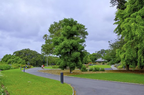 Sydneys-Royal-Botanic-Gardens-sharpen-sharpen.jpg