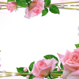 toppng.com-beautiful-pink-roses-photo-frame-beautiful-flower-frames-and-borders-1280x888